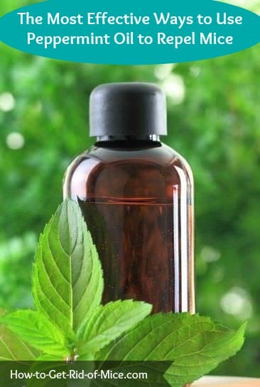 Does peppermint oil repel mice