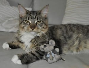Cat sitting with toy mouse as a friend