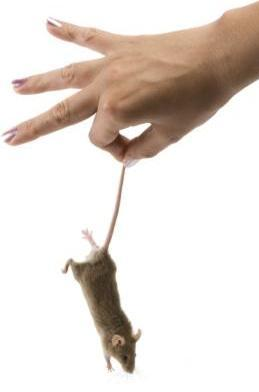 How To Get Rid Of Mice In Your House Fast And Keep Them Away