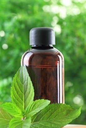 How To Use Peppermint Oil As A Natural Mouse Repellent