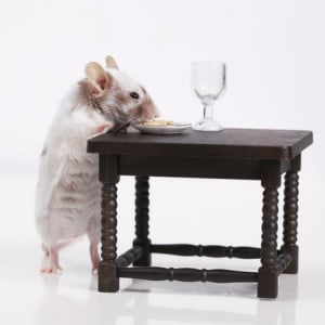 Mouse eating at your kitchen table