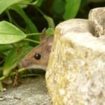 10 Facts About Mice You Should Know