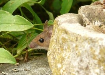 10 Facts About Mice To Help You Get Rid Of Them