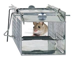 Havahart-1020-trap-with-mouse