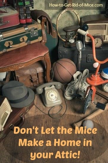Think there is no way mice could find their way into your attic? It's one of their favorite hiding spots. Follow our easy tips to get rid of mice in the attic once and for all.