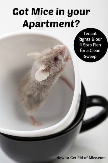 Nobody want to find mice in their cupboards!  No matter how clean a new apartment may look, you should still inspect it completely for evidence of mice. You never know where they may be hiding in a multi-unit dwelling.