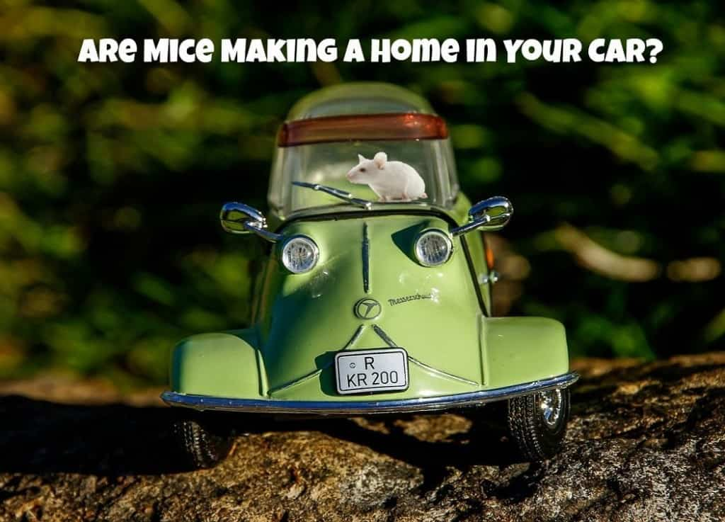 Keep mice out of your car with these easy tips and mouse repellents.
