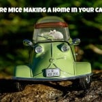 How to Keep Mice and Other Rodents out of Cars & RVs