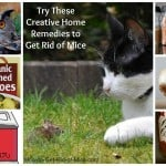 Natural Ways to Get Rid Of Mice - 10 Popular Home Remedies