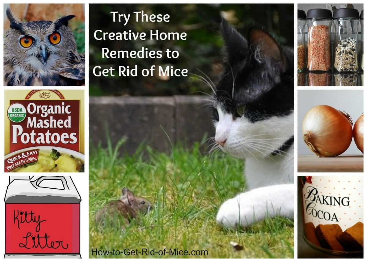 Natural Home Remedies To Get Rid Of Mice