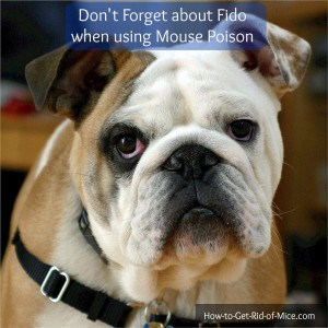 Follow these safety tips when using poison around pets and children