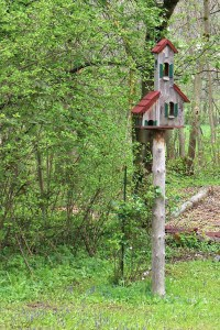 Attracting mice with brid feeders and nearby wooded hiding areas.