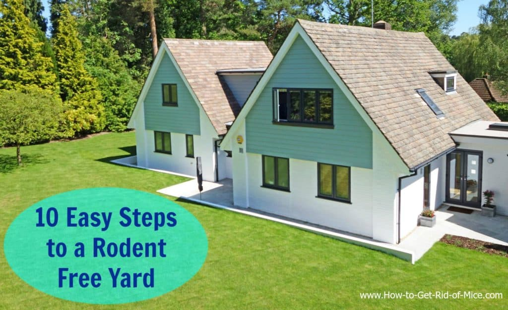 10 Easy Steps to a Rodent Free Yard