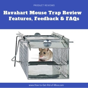 Little grey mouse in the havahart trap - featured