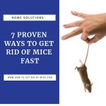 How to Get Rid of Mice in Your House Fast (and Keep Them Away)