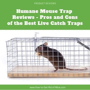 Mouse in Live Catch Trap - Featured