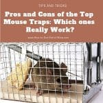 Pros and Cons of the Best Mouse Traps:  Which Ones Really Work?