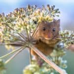 What Are The Different Types of Mice Around Your House and Yard?