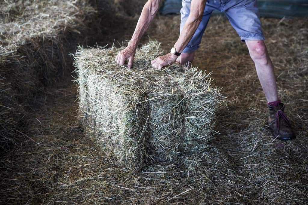 man stacking hay bales in the barn