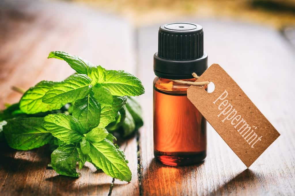 peppermint - fresh leaves and oil