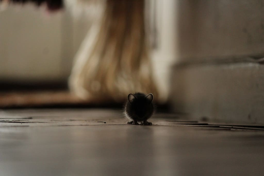 mouse lurking in home at night